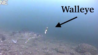 Ice Fishing For WALLEYE With UNDERWATER CAMERA   Mille Lacs Lake   EARLY ICE 2019