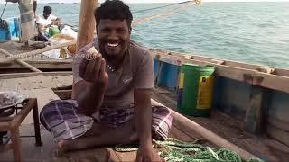 மீன் சுடுதல், மீனவர்கள் படும் துயரங்கள் / cooking fish, fishermen's tough situation in sea
