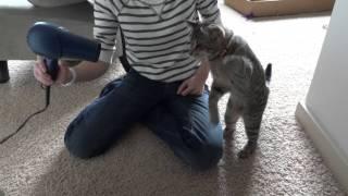 Смешные и забавные животные, Смешная эпическая битва: Слепой котенок сражается с феном