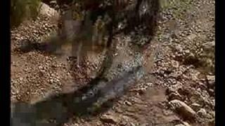 preview picture of video 'ruta en btt por cervera del maestre'