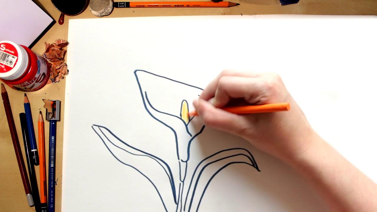 Como desenhar um Lírio - desenhando flores