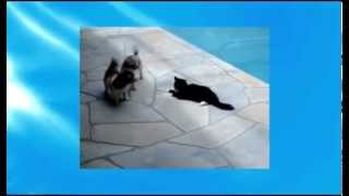 Кот-храбрец