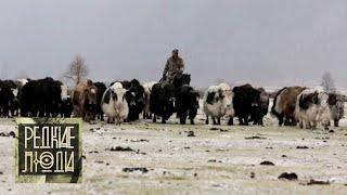 Сойоты. Пастухи снежных верблюдов   Редкие люди 🌏 Моя Планета
