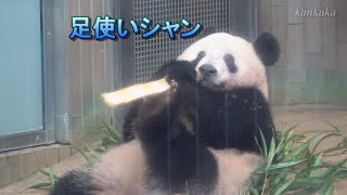 2020.1.24 シャンシャン よく食べ よく寝て➀(Giant panda Xiang Xiang ate a lot.And she has slept well. Part1)