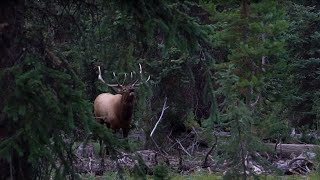 Elk Hunting Kill Shot Compilation: 27 Epic Elk Hunting Kill Shots From Elk101.com!
