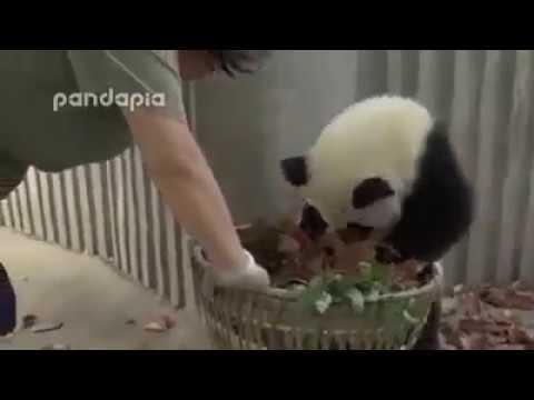 Панды, попробуй договорись на уборку вальера :)