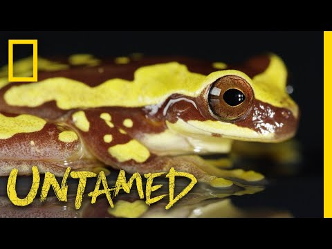 See a Frog and Its Tadpoles | Untamed