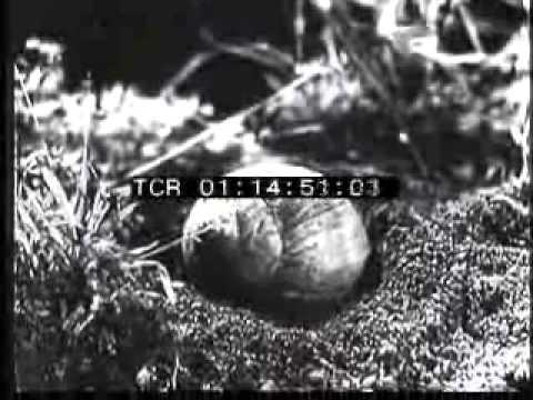 Come liberarsi da parassiti in un organismo come imparare