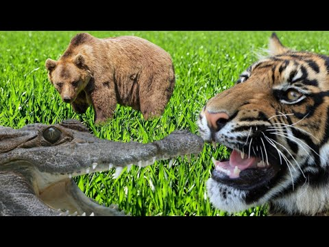 Animals that can put up a fight with the Tiger