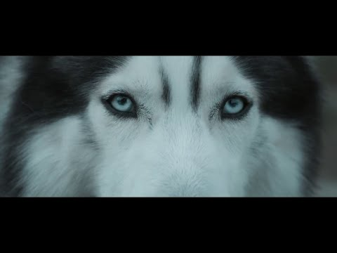 Música Echo (feat. Jonathan Mendelsohn)