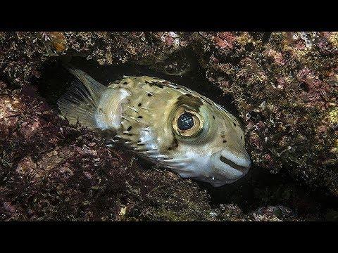 Scuba Diving in Huatulco Mexico | Anfibios +52 (1) 958 587 6154