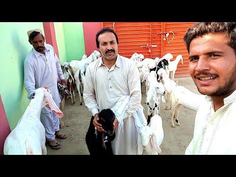 Rawalpindi chai Banai Sar Syed se