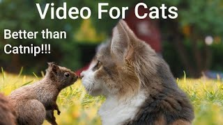 Video For Cats to Watch - Squirrel OBSESSED - 8 Hours of Visual Catnip!