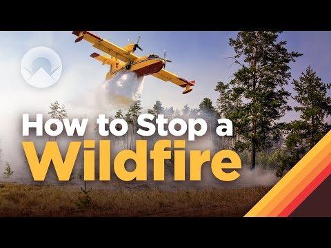Jak se hasí lesní požáry?