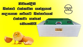 How to make incubator / Egg Hatched / How to make a hatching incubator at home / Home made incubator