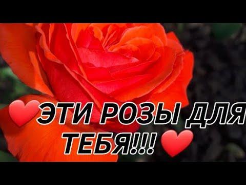 Эти розы для тебя.Только для тебя!!!