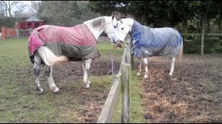 Introducing a new horse to the herd - Part 1