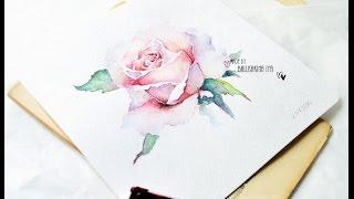 Рисуем розу акварелью / Rose watercolor paint