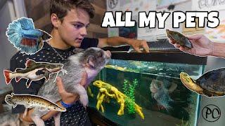 ALL MY FISH & TURTLES!!! (backyard tour)
