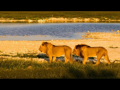 See One of the Foremost Wildlife Sanctuaries in Africa
