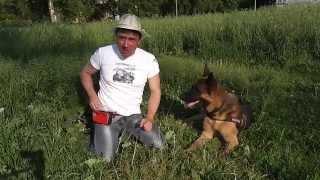 Смотреть онлайн Как научить собаку команде «Умри»