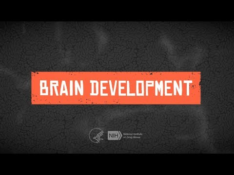 Teen Brain Development