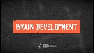 For Teens: Teen Brain Development
