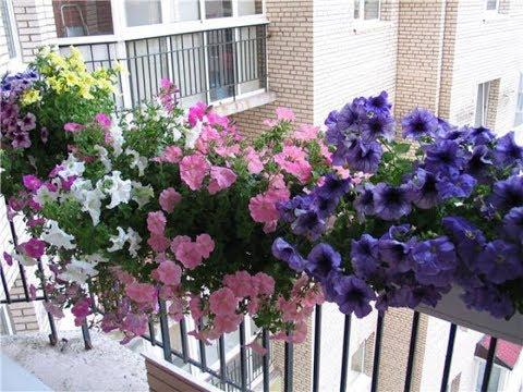 Цветущий балкон для начинающих