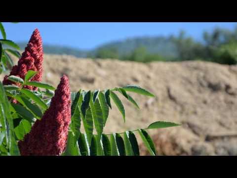 Casa rural Lalisea - Un oasis en La Vera (Talaveruela de la Vera - Caceres) HD