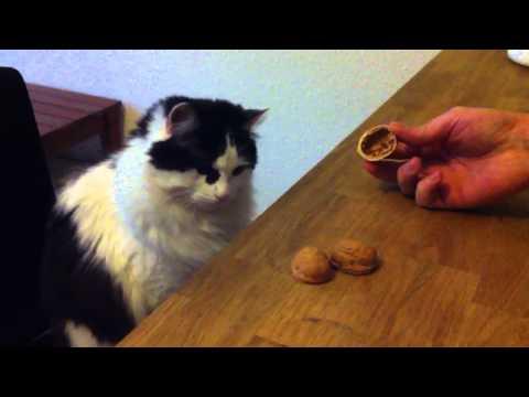 חתול משחק על עיוור