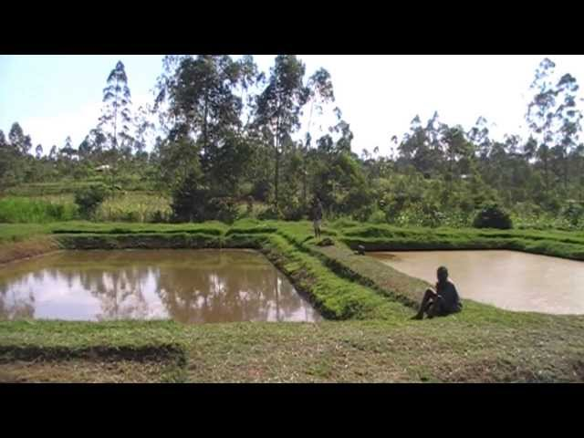 FISH POND MANAGEMENT 1 - What you need to know