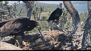 Big Bear Eagles ~ Jackie *SHARES* Her Fish ~ Simba Gives Mom A VERY SPECIAL *GIFT*  7.13.19