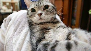 おひざ抱っこでゴハン待機にゃっはん!と鳴いた猫