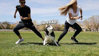 Trying Funny TikTok Trends On Huskies!