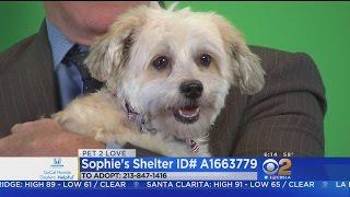 Pets2Love: Sophie