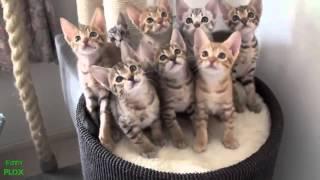 Приколы с котятами. Смешные коты. Best Funny Cat Videos Compilation 2013 NEW HD