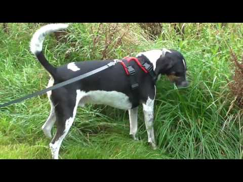 'PERFECT FIT' DOG HARNESS  - TRAILHOUND TEST