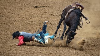 Funny Horse Fails Compilation