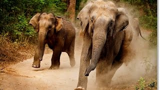 Horrible Elephant Attack ever / worst eliphant attack