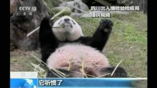 Now in China, Bao Bao Starts Quarantine