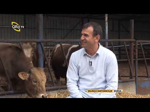 Bilinçli Hayvancılık/Besi Hayvancılığında Bilinmesi Gerekenler
