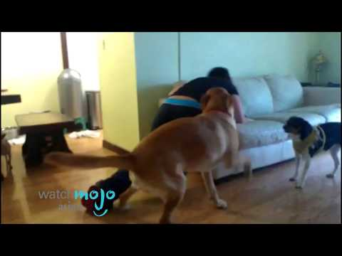 Girl and Her Dog | Horny Dog