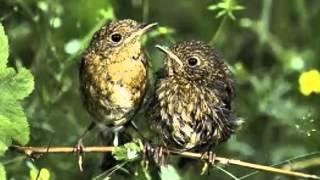 Nik P.  -Wenn ein Vogel lernt zu fliegen