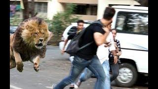 (Must watch) शेर आया प्रैंक.!! SHER AAYA PRANK   Pranks in India 2018