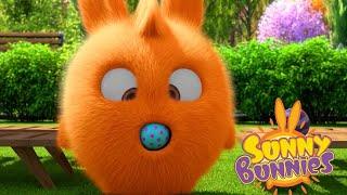 Sunny Bunnies | BALÃO BLUES | Desenhos animados | WildBrain em Português