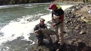 preview picture of video 'Chinook salmon river fishing, Niagara Whirlpool, Niagara River, ON'