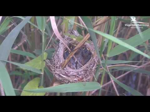 Nest looks cramped - 13.07.17