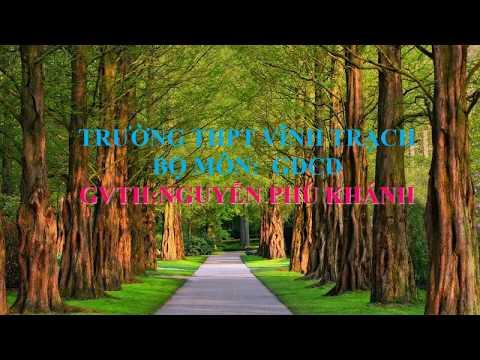 GDCD 11: Bài 13
