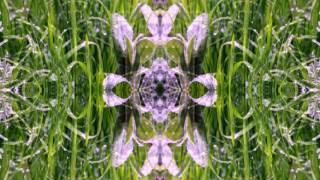 Grassland Xa