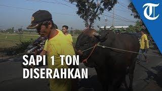 Warga Klodran Solo Mendapat Bantuan Sapi Qurban Seberat 1 Ton dari PT Bintang Toedjoe - Tribunnews
